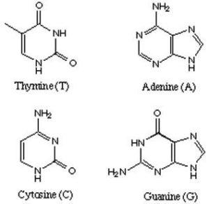 diagram of price elasticity of demand diagram of thymine