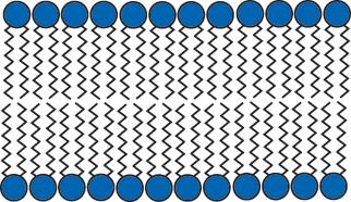 Bi Layer Diagram