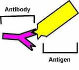 Carbon Antigen Diagram
